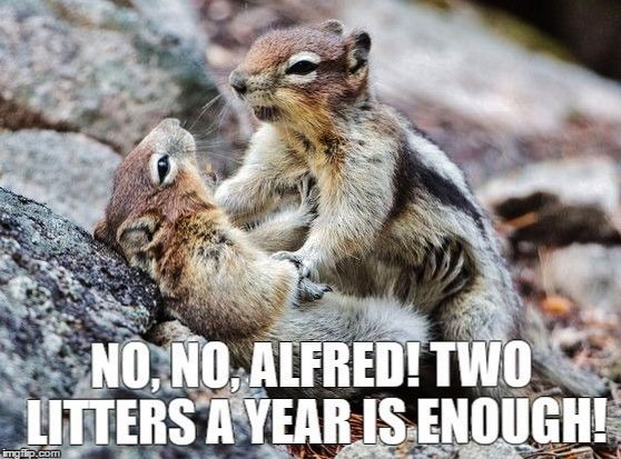 Funny Animal Memes : 422 best funny animal memes and cartoons images on pinterest funny