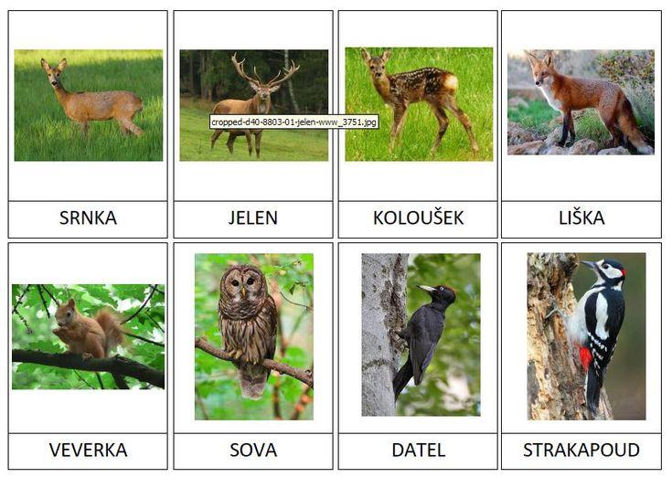 20 kartiček s lesními zvířátky