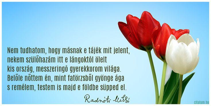 Radnóti Miklós idézete hazaszeretetéről.