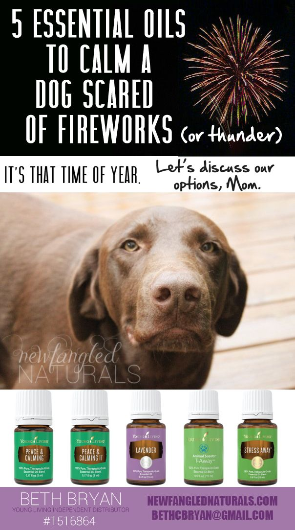 5 Essential Oils to Calm a Dog Scared of Fireworks and Thunder