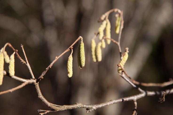 https://flic.kr/p/CQT7R1 | Branches, Karkali Nature Park