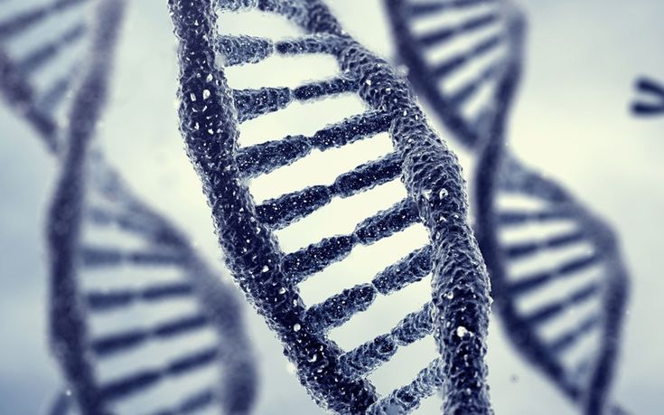 Memories may be passed down through generations in DNA in a process that may   be the underlying cause of phobias