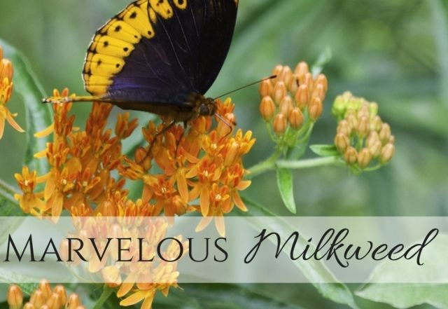 Lepidoptera - Wikipedia