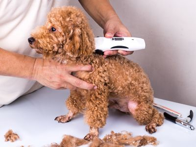 7 best dog grooming images on pinterest dog grooming dog clipper care grooming business magazine september 2016 solutioingenieria Choice Image