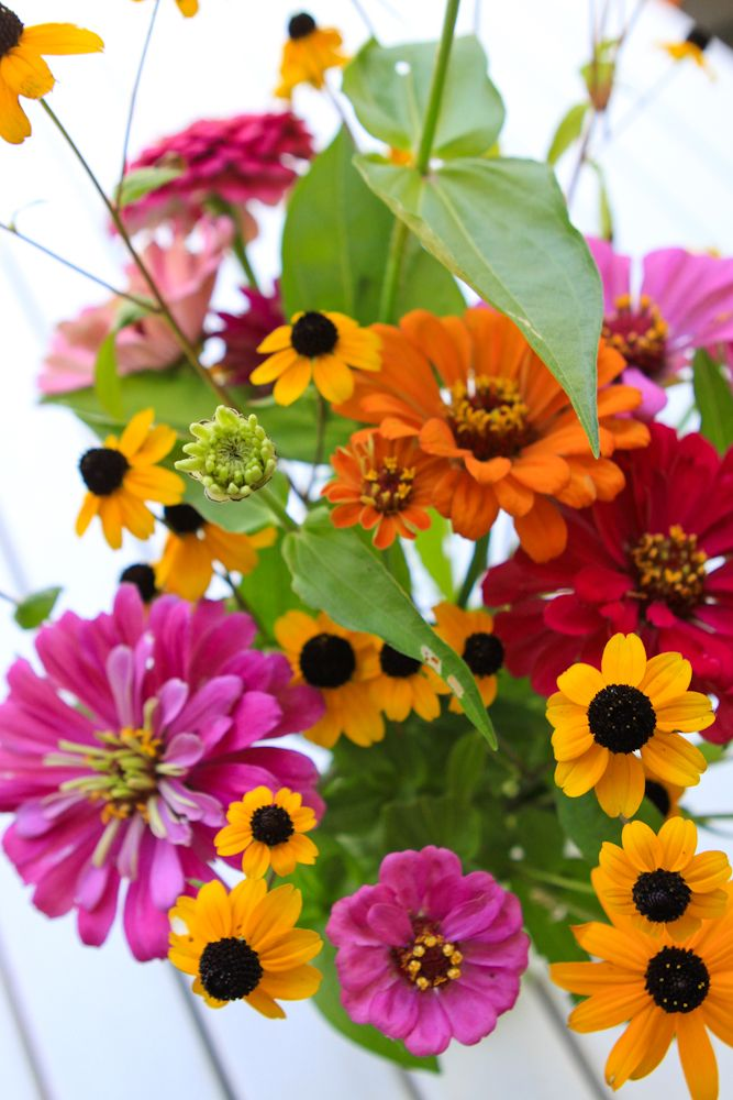 Nothing better than the mix of zinnias and brown-eyed susans!