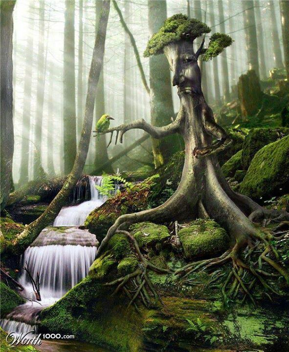 mans relationship with nature transcendentalism Nature is an essay written by ralph waldo emerson, and published by james  munroe and  society, he says, destroys wholeness, whereas nature, in its  ministry to man, is not only the material,  emerson defines a spiritual  relationship.