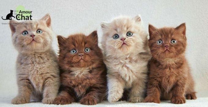 Chaton à adopter : les 5 règles essentielles pour le bien-être du chaton