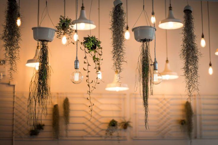 Idee für kleine Küche, Platz schaffen in kleiner Küche, Kräuter Küche, Pflanzen in der Küche