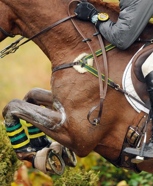 green and yellow. my cross country colorsEvents Hors, Equine, Horses, Crosscountry, Ponies Jumpers, Hunters Jumpers, Equestrian, Animal, Crosses Country Hors