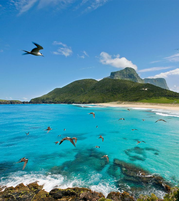 Lord Howe Island, Australia. The crystal blue waters of Blinkie Beach - Click the image to book your luxury island getaway!
