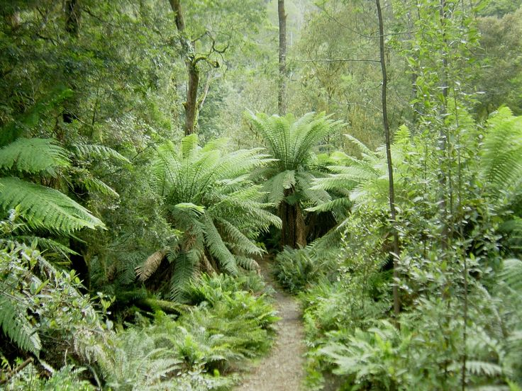 Hellyer Gorge, Tasmania, Australia - The Tasmanian rainforest is considered a relic of the Gondwana land.