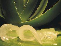 Tratamientos para el Cabello con Sábila. La sábila o también conocida como aloe vera cuenta con una alta cantidad de enzimas que son especiales para el cuidado del cabello para que tengas una mele
