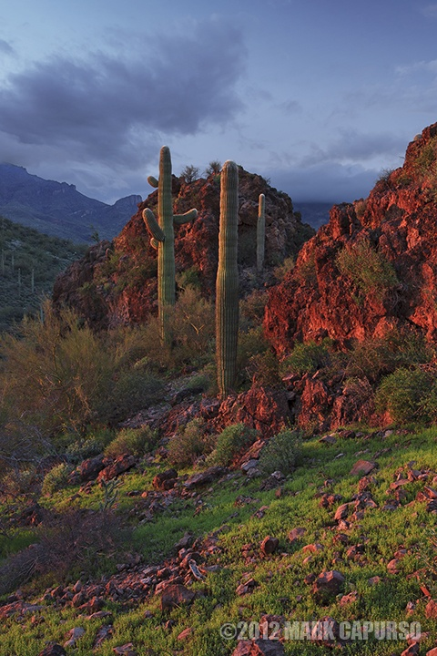 The Sonoran Desert, Cave Creek, AZ at sunset after a passing winter storm.