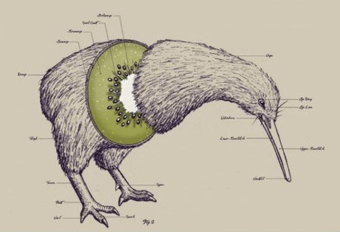The wonders of animal anatomy.