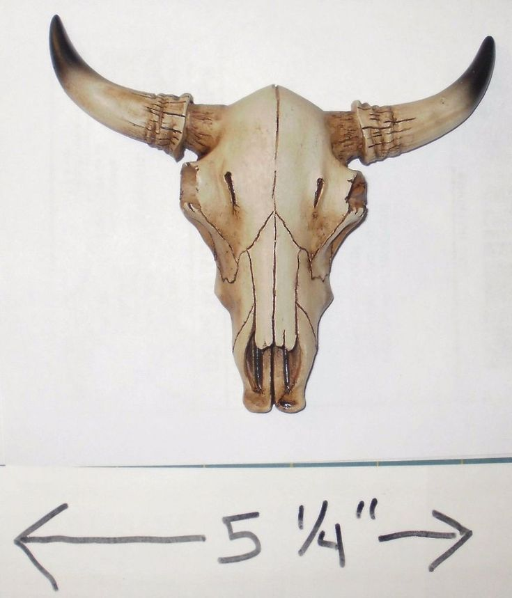 Image result for cows skeleton skull