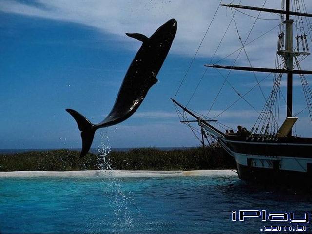 Orca a baleia assassina