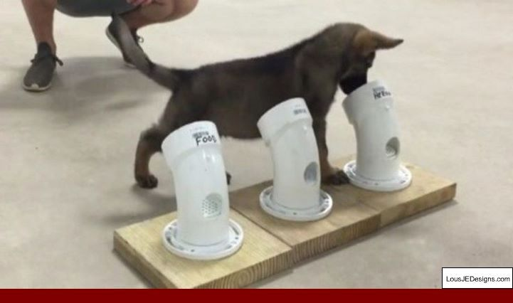 How To Train Your Dog To Scratch Your Back And Pics Of How To