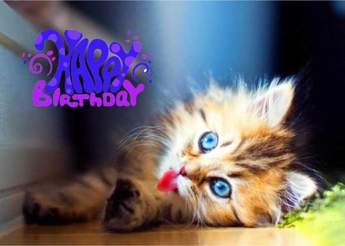 17 Best images about Happy Birthday Wishes – Happy Birthday from the Cat Card
