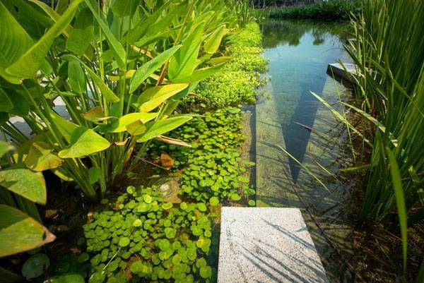 The pond edge is designed with different levels below the for Biofiltration pond