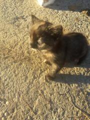 80 € - Katzen - Wunderschöne Babykatzen Kätzchen Kitten