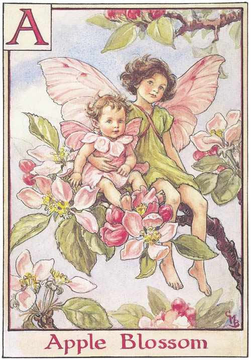 Flower Fairy - Apple Blossom