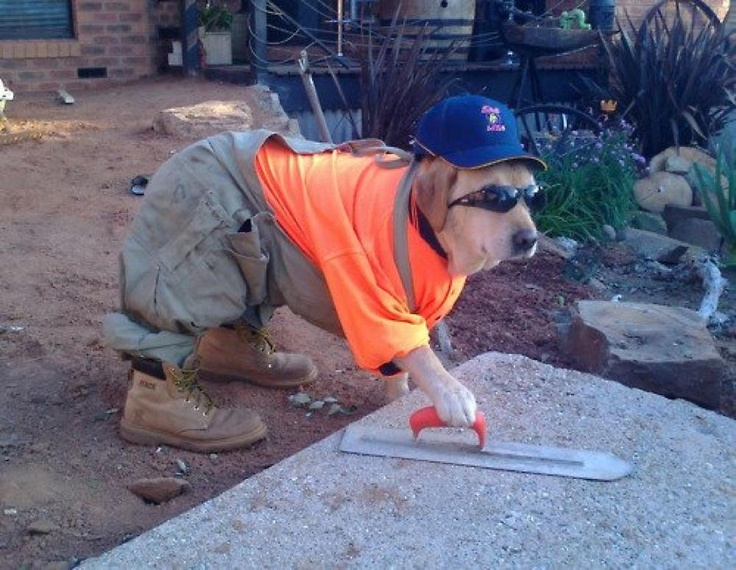 He works harder than most construction workers I've seen.