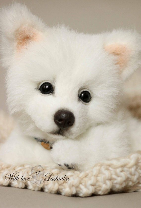 0467f43fd36f American Eskimo Dog Koda OOAK Artist collectible stuffed puppy teddy dog  handmade plush Portrait pet #