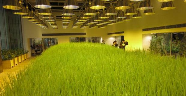 Alimentazione sana e autoproduzione di cibo a km zero: una fattoria urbana a Tokyo