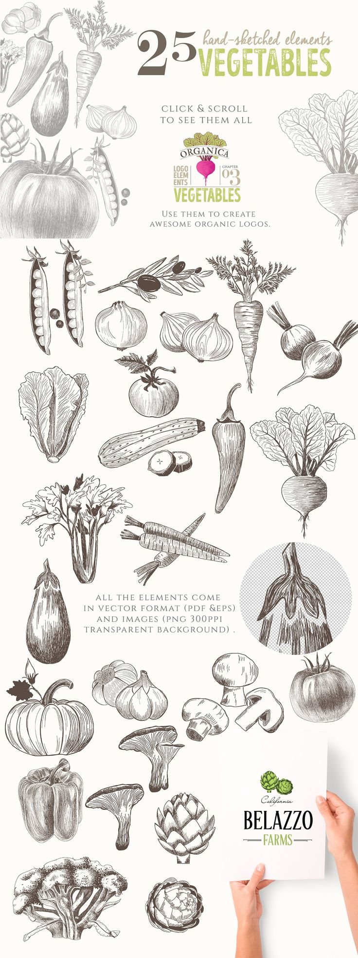 ORGANIC LOGO ELEMENTS – VEGETABLES by Friendly Label on @creativemarket logo, organic, vegetables, hand-sketched, hand-drawn, vector, illustrations, graphics, beet, carrot, olive, tomato, onion, radish, peas, lettuce, zucchini, chili, celery, eggplant, garlic, mushrooms, broccoli, artichoke