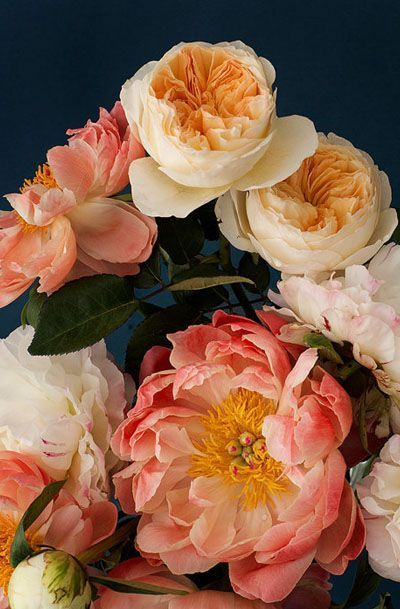 pink, peach & pale yellow blooms #flrowers #peonies #gardenrose