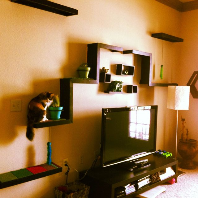 Cat jungle gym made from recycled wood and Flor carpet tiles, with cat grass and catnip planters.