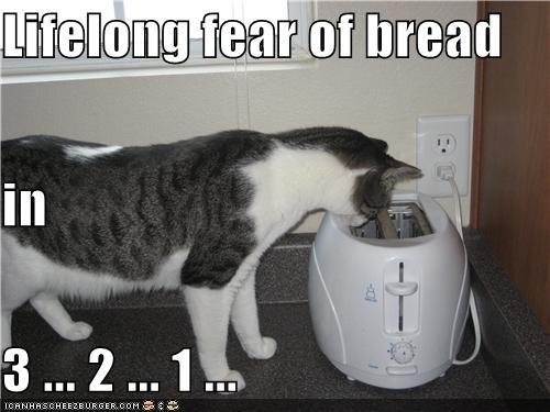 FUNNY CAT: Funny Kitty, Animal Jokes, Funny Cat, Bad Cat, Funny Bones, Dat Funny, Animal Behavior, Funny Stuff, Animal Funny