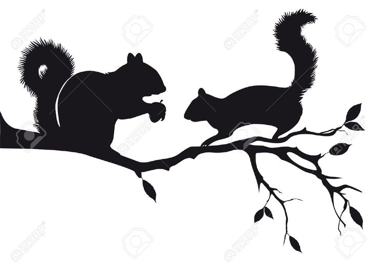 Squirrel Stock Illustrations, Cliparts And Royalty Free Squirrel ...
