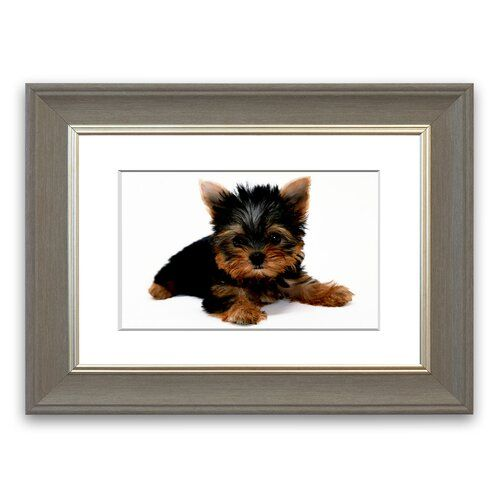 Yorkshire Terrier Puppy Wild Life Canvas Cornwall Portrait Framed Wall Art East Urban Home Size 40 Cm H X Yorkshire Terrier Terrier