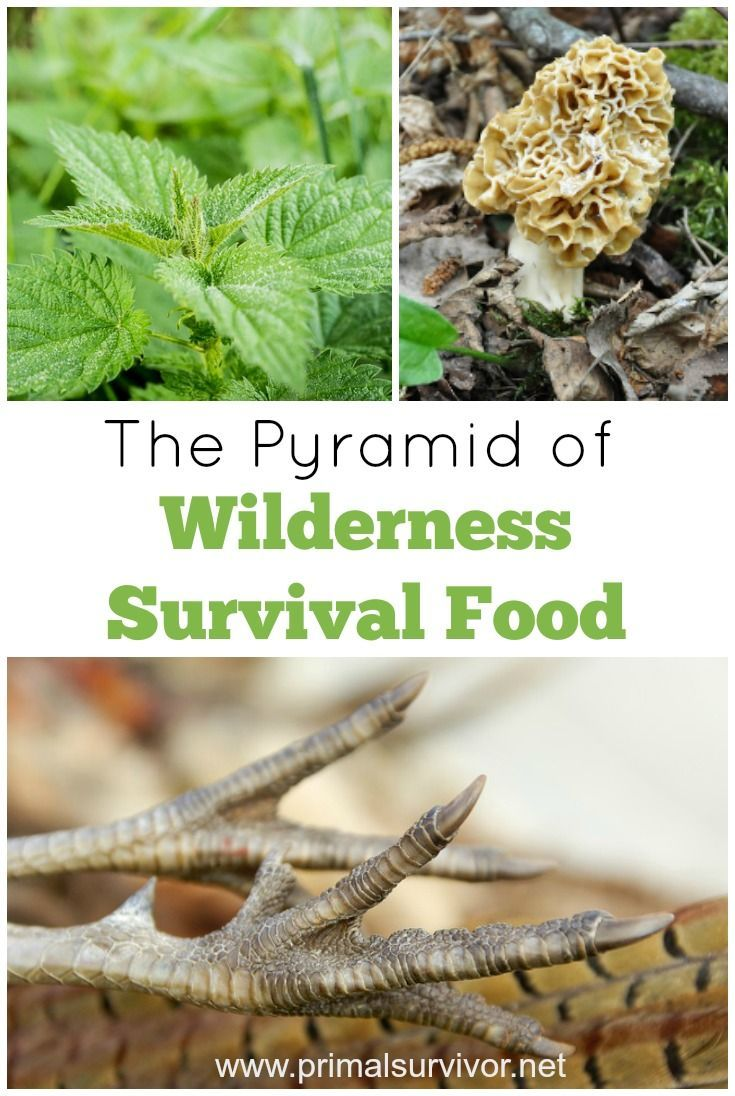 The Pyramid of Wilderness Survival Food. For me, knowing what foods can be eaten in the wild isn't just about survival.  It is about self-sufficiency and having a connection with nature.  There is nothing tastier than eating a meal which you found and prepared all on your own.The Wilderness Food Pyramid isn't about what you should eat.  Rather, it shows you what foods you should learn to eat available based on your skill level.