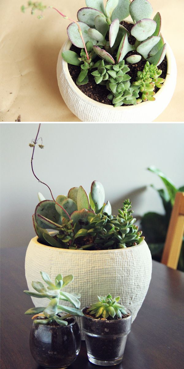 671 Best Images About Pots Amp Planters Galore On Pinterest