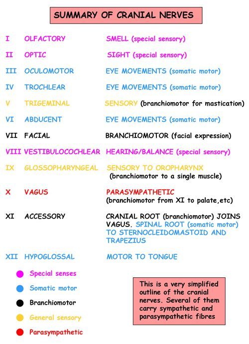 Instant Anatomy - Head and Neck - Nerves - Cranial - Classification, functional overview
