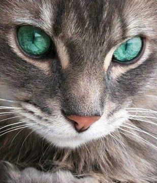 ♥ olhos de gato...