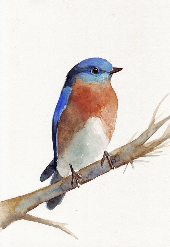 Bluebird Watercolor Painting Print by Splodgepodge