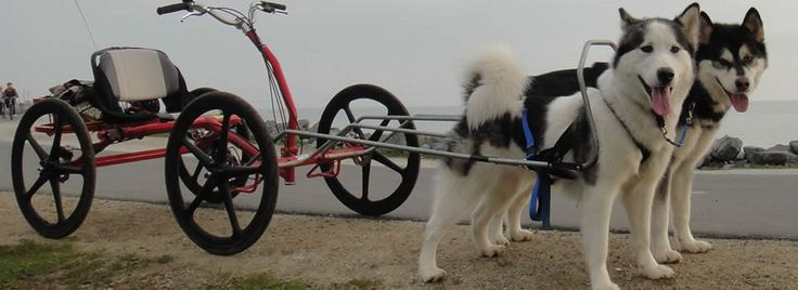 Urban Dog Sled For Sale