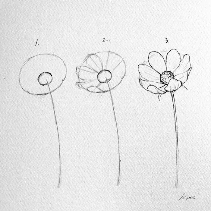 Pictures Of Flowers To Draw Step By Step Diy Tutorial Black Pencil Sketch White Background In 2020 Drawings Flower Drawing Tutorials Flower Drawing