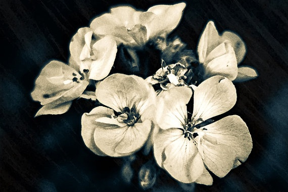 Floral White Petal Simplicity Flower Artwork by MissDawnFineArt, $7.50