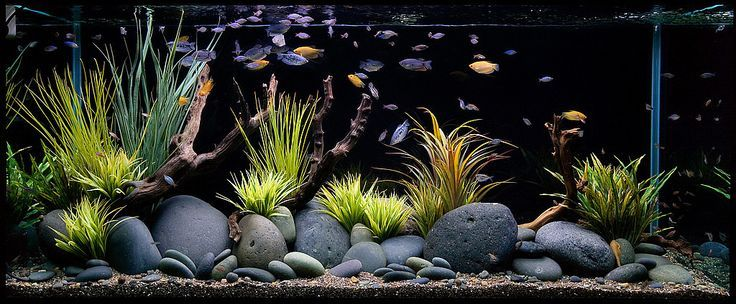 goldfish aquarium design - Google Search