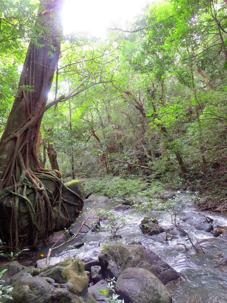 This may look like a fairy tale forest but it's real - Rincon De La Vieja Volcano National Park, Costa Rica <3