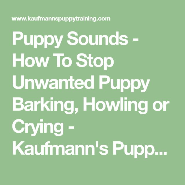 Puppy Sounds - How To Stop Unwanted Puppy Barking, Howling or Crying - Kaufmann's Puppy Training Site