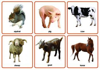 Included are 3 full sets of 54 different animal picture cards; pictures only; words and pictures; and a set to use with dry erasers. Also included are 4 pages describing strategies, activities and games targeting receptive and expressive language (e.g.