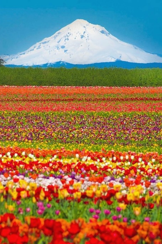 Mt Hood,Oregon