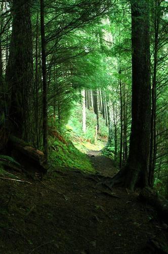 Neahkahnie Mountain Trail, Oregon Makes me want to go on a hike