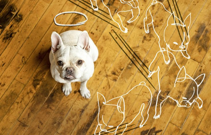 How to Repair Dog Damage to Wood Flooring - Scratches and stains are the hallmarks of dog ownership. But you can fix the damage done—and minimize the chance of future mishaps