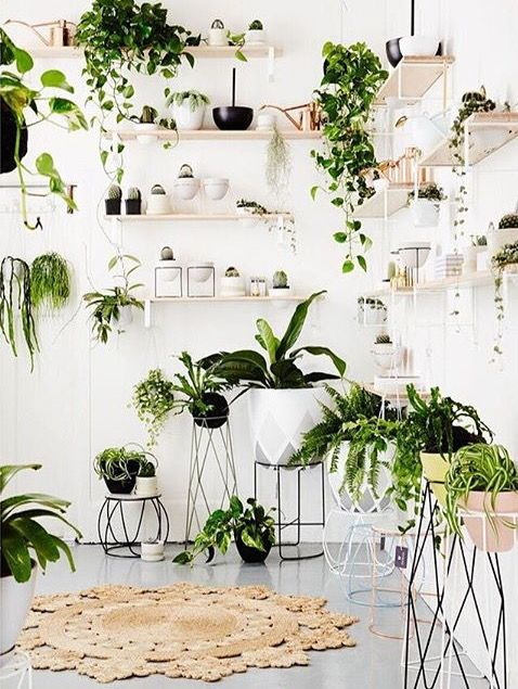 Indoor Plants improve indoor air quality dramatically and give a room texture and life!